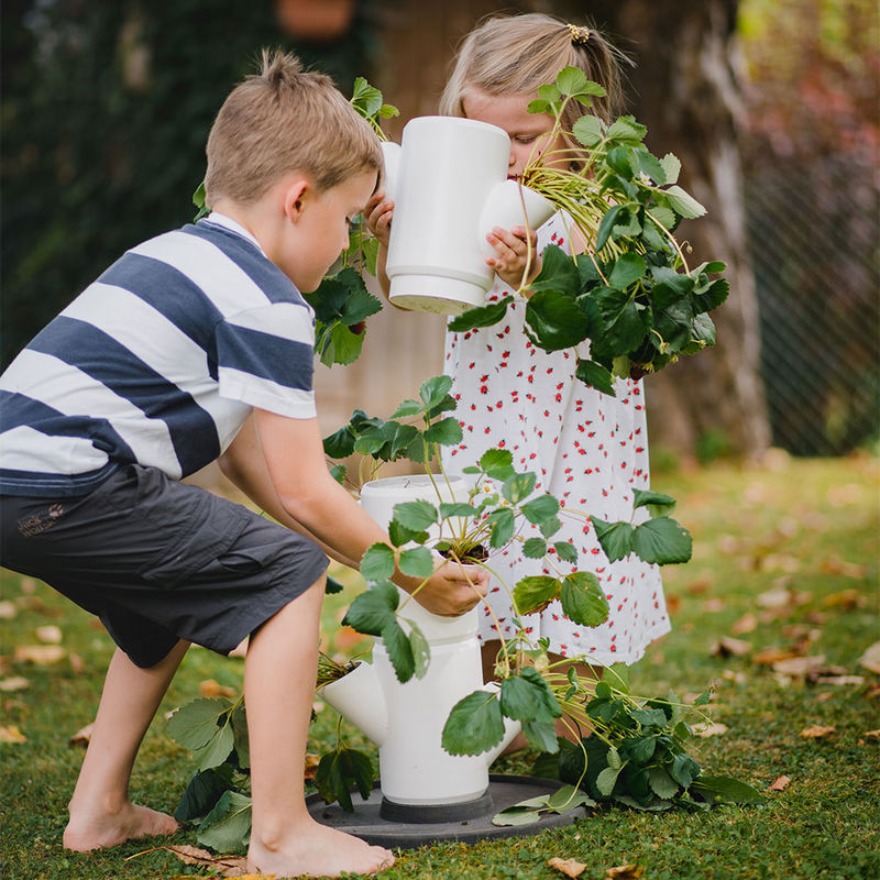 frische erdbeeren f r alle innovativer pflanzturm f r. Black Bedroom Furniture Sets. Home Design Ideas