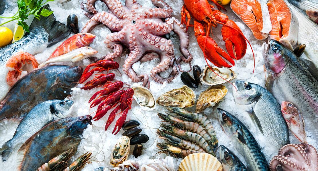 Köstliche Meeresfrüchte - Wissenswertes zu Kalamar, Oktopus und Sepia